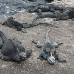 Residents of Galapagos